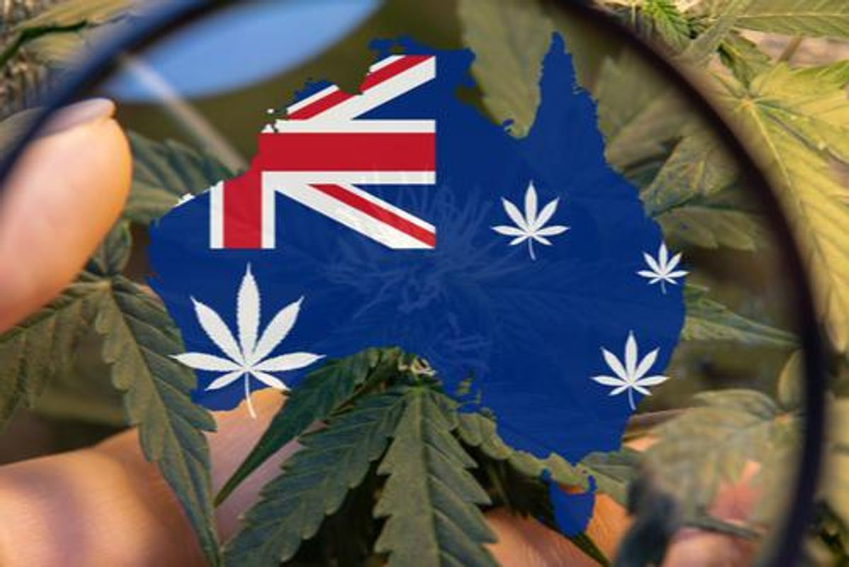 map of Australia with cannabis plants