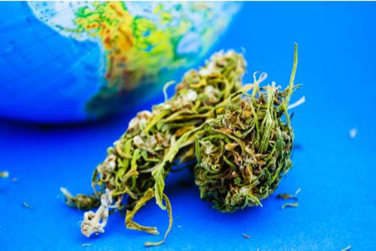 cannabis bud with australia on globe