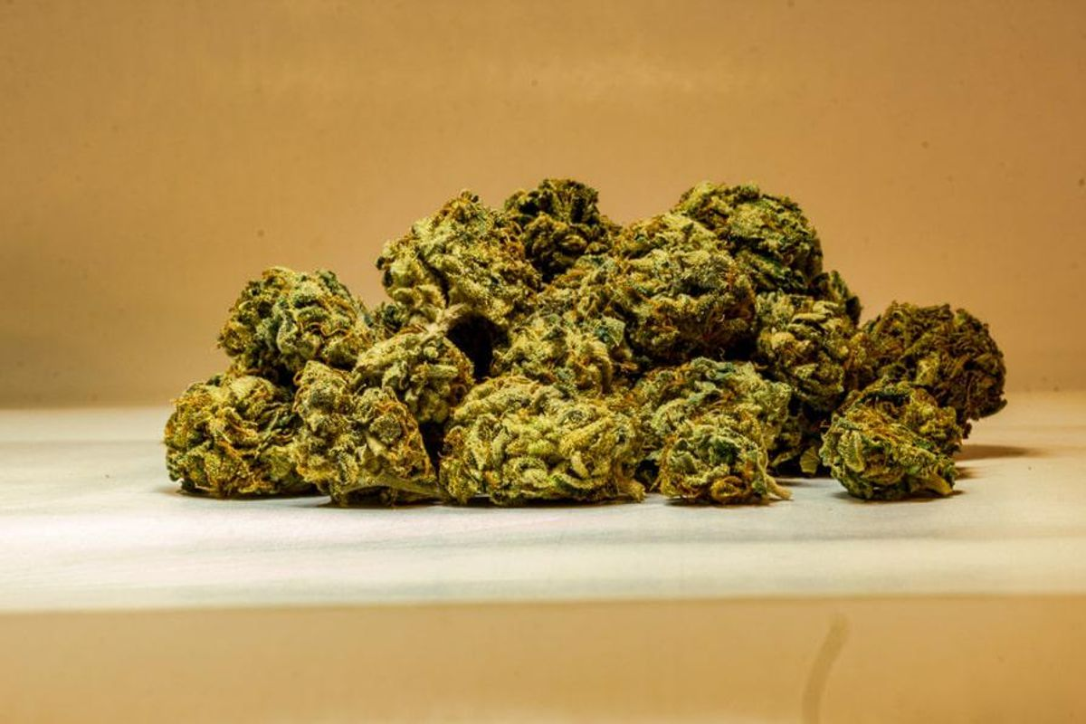 a pile of cannabis buds