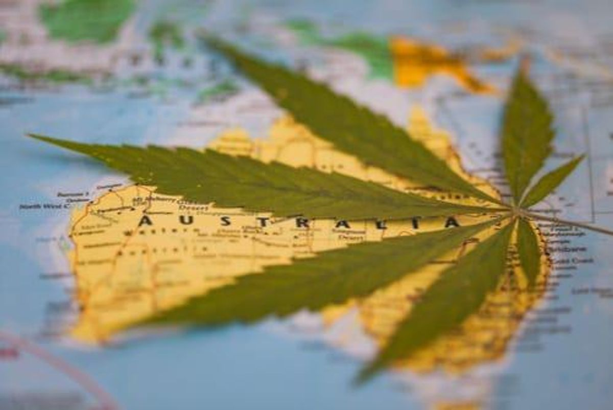 Cannabis in the ACT: The Market a Year Post-Legalisation