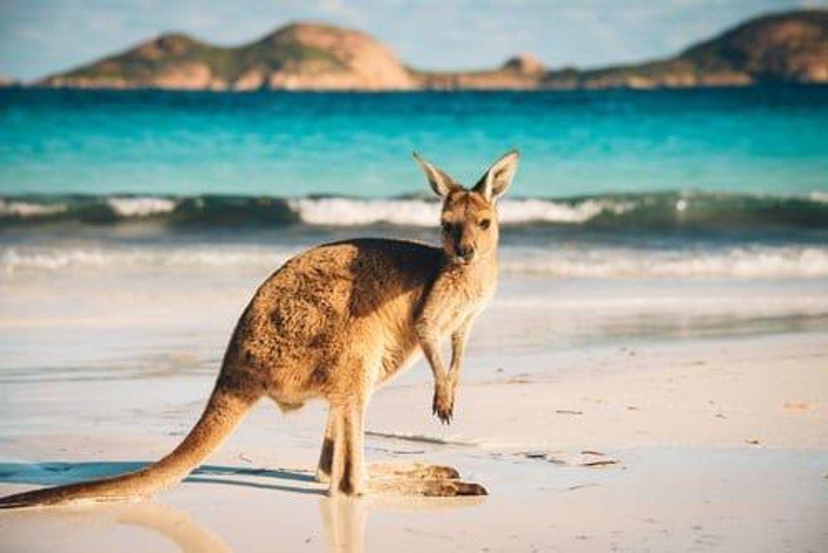 Investing in Lithium in Australia