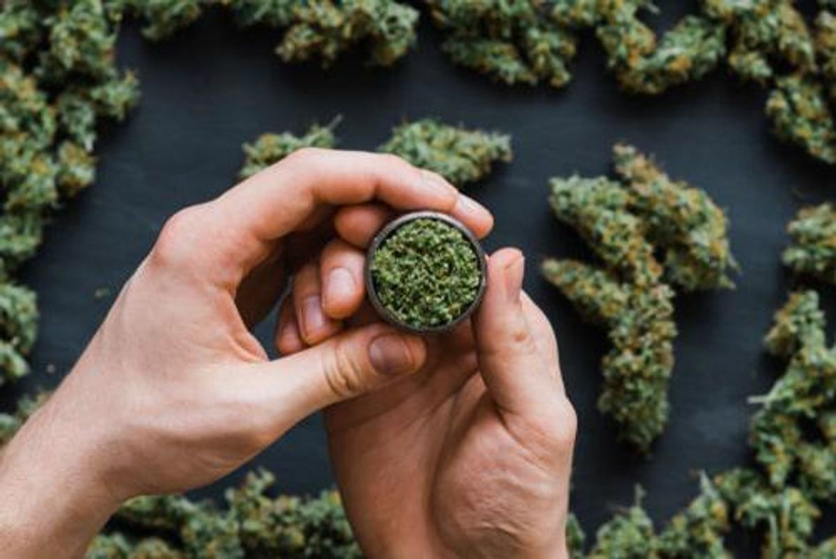cannabis grinder full with plant