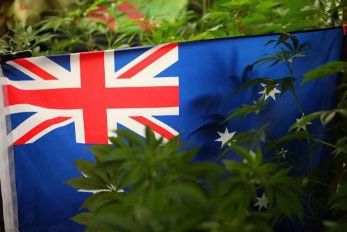 Top ASX Cannabis Stocks of H1 2021
